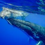 CBPP_20130831_Whale-215-M