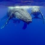 CBPP_20130831_Whale-351-M