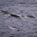 CBPP_20130831_Whale2-103-M
