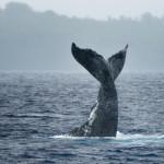 CBPP_20130831_Whale2-216-M