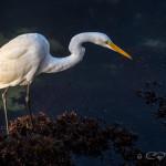 CBPP_20140502_13594_Monterey-M