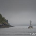 Fishing boat in the fog, Blackfish Sound