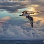 Sunrise Flight, Solomon Islands 2012