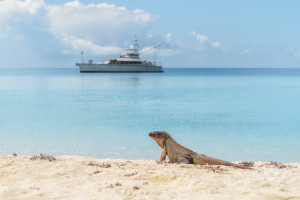 Image result for iguana cay bahamas