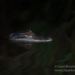 CBPP_20150320_Everglades-359-M